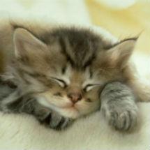 cats_012thumb